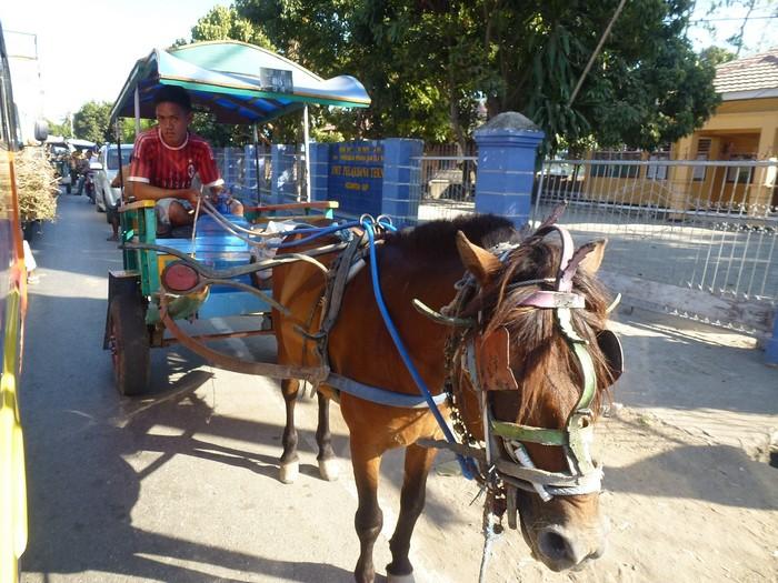 blog ferry bus bali komodo mi aventura viajando (17)