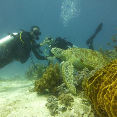 Alona Beach – Bohol: Buceo, Kayak, Chocolate Hills y Tarseros ¡Una isla súper completa!