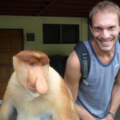 Orangutanes y Monos Narigudos. Increíble verlos en libertad. Paraíso animal en Sepilok – Sandakan, Borneo
