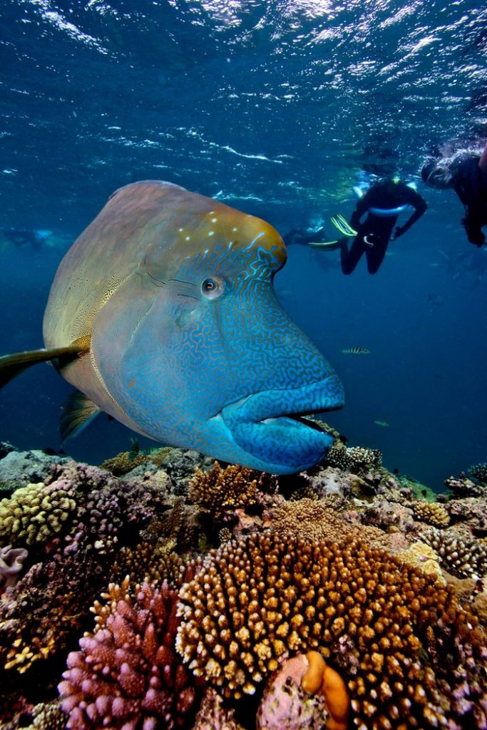 gran-barrera-coral-australia-mi-aventura-viajando-1