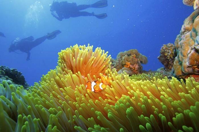 gran-barrera-coral-australia-mi-aventura-viajando-12