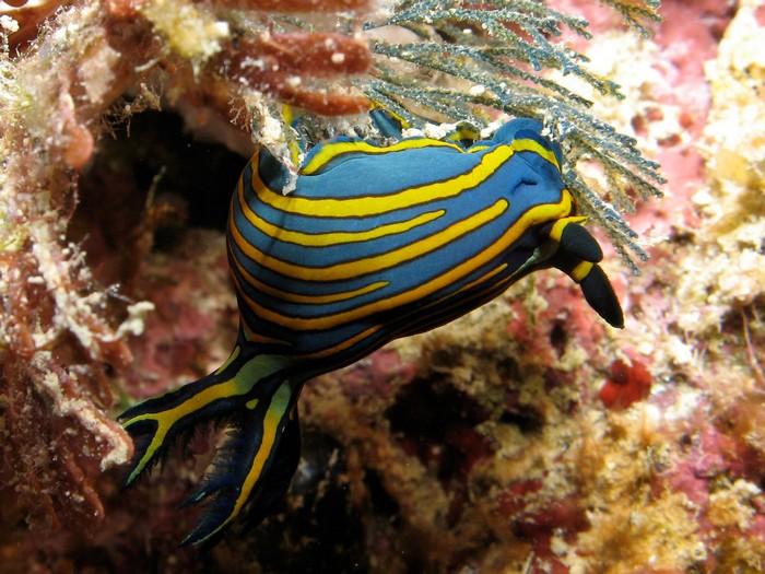 gran-barrera-coral-australia-mi-aventura-viajando-2
