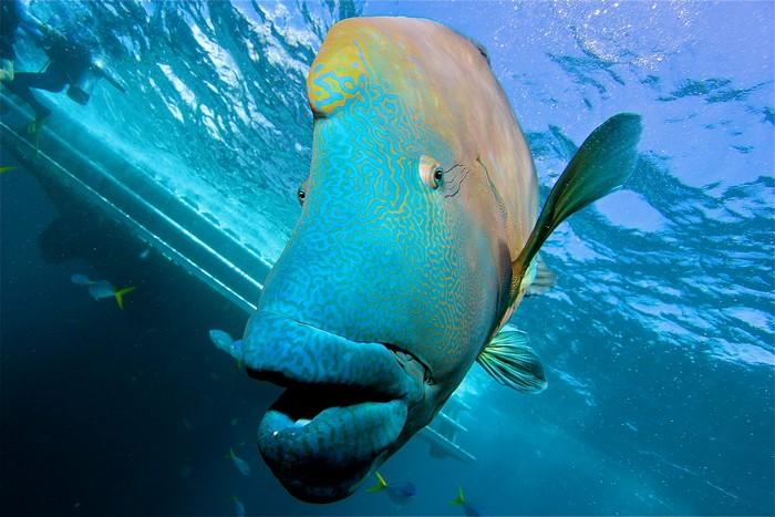 gran-barrera-coral-australia-mi-aventura-viajando-3