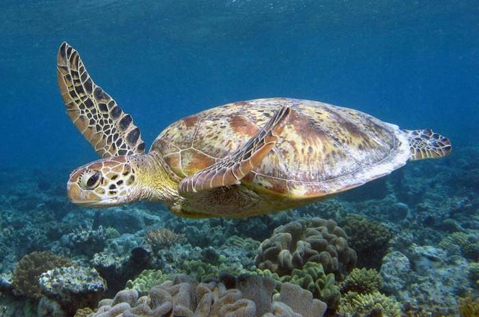 gran-barrera-coral-australia-mi-aventura-viajando-5