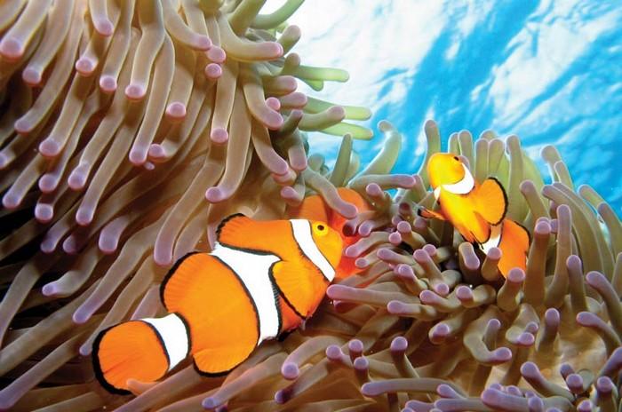 gran-barrera-coral-australia-mi-aventura-viajando-8