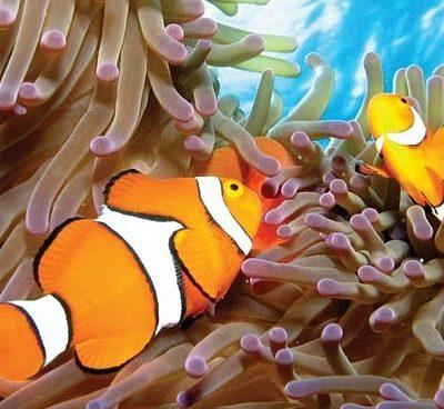 La Gran Barrera de Coral Australiana: Famoso paraíso del buceo y snorkeling