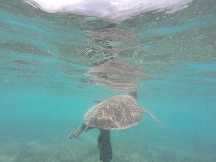 whitsundays-mi-aventura-viajando-10