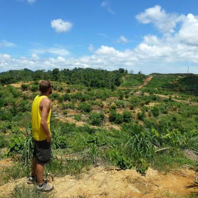¿Cómo destruir el planeta? Aceite de palma, la vergüenza del Sudeste Asiático. Una plantación desde dentro.