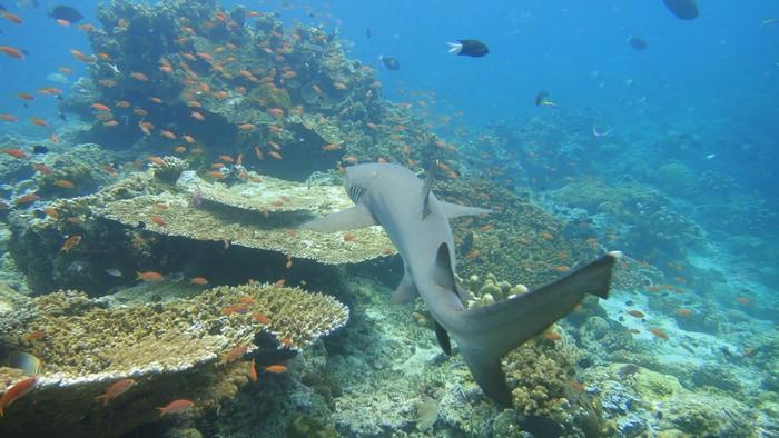 islas paradisiacas sudeste asiatico mi aventura viajando (5)