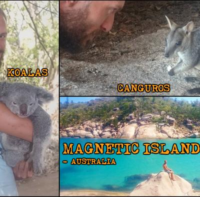 Abrazar a un Koala y ver Canguros en libertad en la paradisíaca Magnetic Island. ¡Sueño cumplido!
