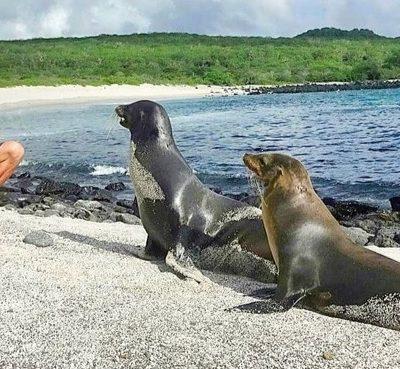 La mejor Guía de Galápagos: Planes gratis por libre, excursiones, buceo y datos prácticos en este Paraíso Natural